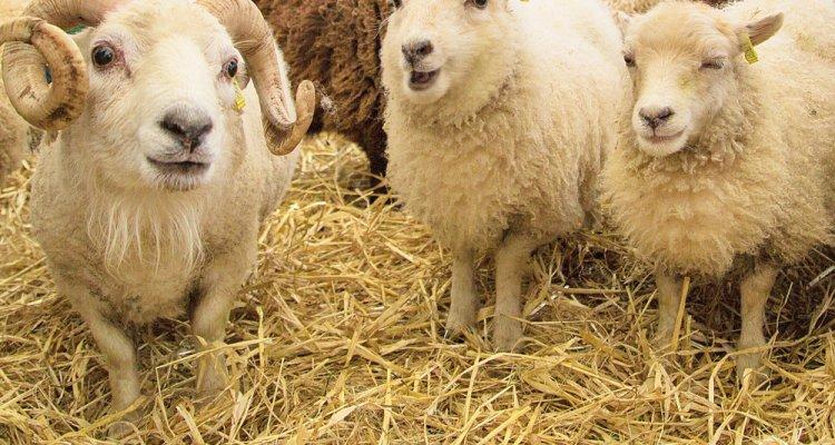 Wool-Gathering-2015-0398 - Lancaster