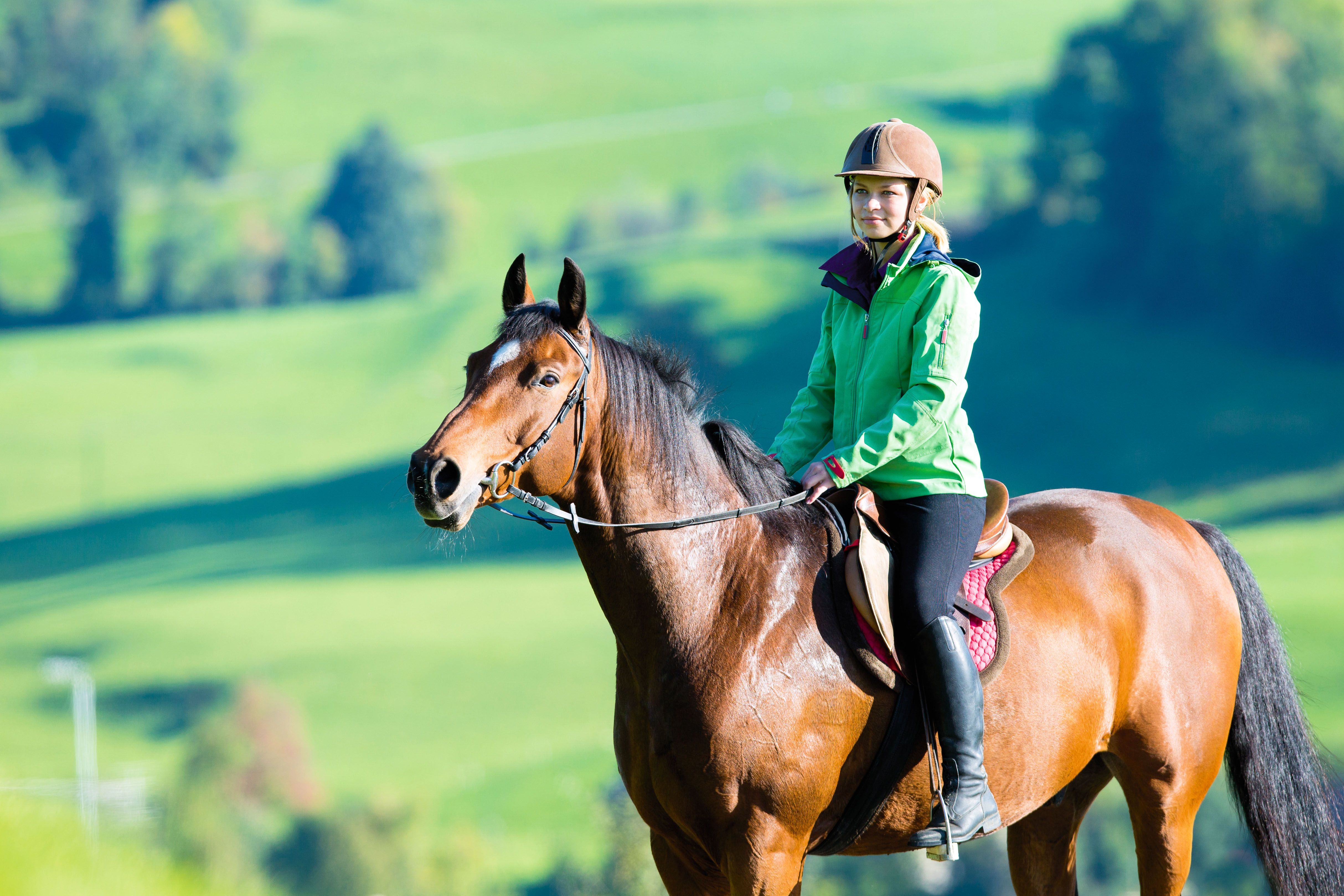 horse riding lessons essay